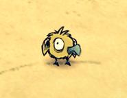 Mały Dodo (DSS)