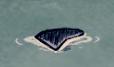PłetwaDelfinaButlonosego