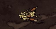 Wykopana trzcina