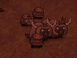 Hodowla bawołów