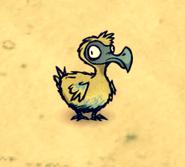 Młody Dodo (DSS)