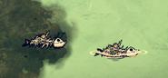 Zgniła ryba w grze (DSS)