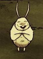 Klaszczący wielki królik