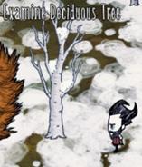 Liściaste drzewo zimą