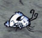 Śpiący zimowy królik