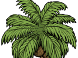 Kokos (DSS)
