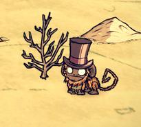 Małpa tropikalna w kapeluszu (DSS)