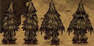 Drzewiec ze wszystkich stron
