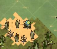 Miejsce Dodo na mapie (DSS)