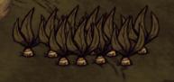 Farma Mandragory