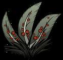 Krzak jagodowy 2