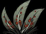 Krzak jagodowy