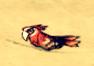 Papuga dss