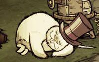 Śpiący wielki królik w cylindrze