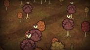 Las drzewców liściastych