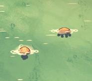 Meduzy w oceanie
