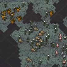 Biom grzybowy na mapie