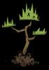 Zasadzone drzewo dżungli (DSS)