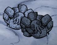 Śpiące skalne homary