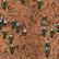Czerwony las grzybowy na mapie