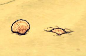 Muszelka odkopana i zakopana (DSS)