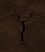 Spalone drzewo gałązkowe (DST)