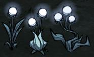 3 rodzaje świecących kwiatów