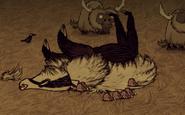 Martwy borsuk