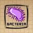 Bacteria (DG)