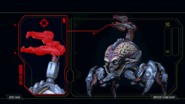 Arachnotron Codex Image Large