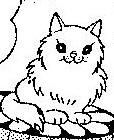 白色波斯貓