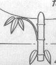 七夕許願火箭
