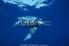 Leatherback (1)