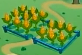 Corn feild