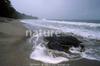 Leatherback (2)