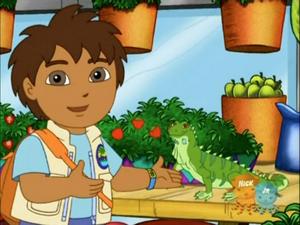 Diego with Green Iguana