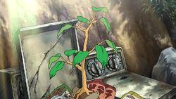 Kibou cây nhỏ