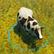 Dos obj vache