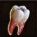 Dos obj dent affûtée