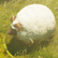 Dos obj mouton