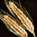Dos obj blé