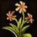 Dos obj herbe de poussière d'étoile