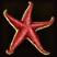 Dos obj étoile de mer éclatante