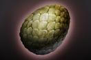 Greevil Egg