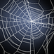 Spin Web