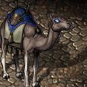 Desert wanderer mount