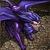 Purple manticore