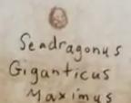 Seadragonus Ei Buch