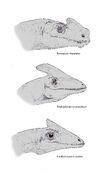 Prehistoric lophoraptorids by hyrotrioskjan