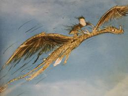 Windwalker Buch